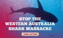 Greenpeace Shark Massacre Ad smaller